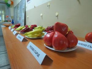 """Изложба на сортове зеленчуци от ИЗК """"Марица"""""""